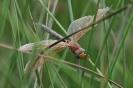 Insectenfoto Tjerk