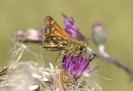 Insectenfoto's van Dico