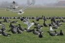 Vogelfoto's Tjerk